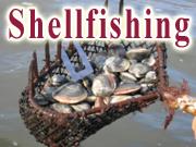 Town of Barnstable Shellfishing