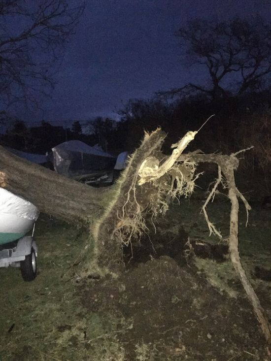Picture of tree roots and tree squishing a boat after hurricane force winds knocked the tree over